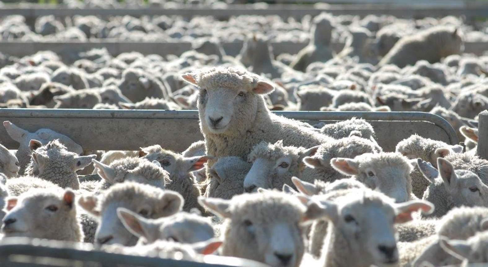 100% finance for livestock